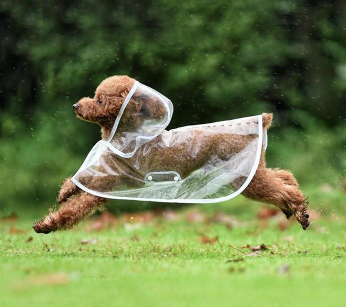 【レインコート クリア×ホワイト】雨の日 お散歩 雨具【犬 猫 ペット 子犬 ヘッド 雨対策 防水】透明 白 レインジャケット 雨天 お出かけ お散歩グッズ 散歩
