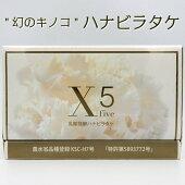 送料無料乳酸発酵ハナビラタケX5120粒サプリ健康美容乳酸菌βグルカンアミノ酸きのこはなびらたけ中高年日本製スーパーフード健康食品エストロゲン人気おすすめ