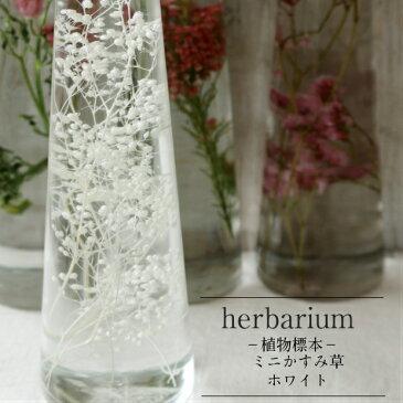 【herbarium Bottle】ハーバリウムボトル かすみ草<ホワイト>−植物標本− 期間中こちらの商品のギフト包装は有料となります。