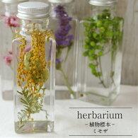 【あす楽対応品】【HealingBottle】ハーバリウム角ボトル<スクエアミニ>ミモザ−植物標本−母の日ギフト