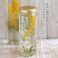 【herbariumBottle】ハーバリウムボトル八角ボトルMサイズ【Medium】花<ミモザ>−植物標本−