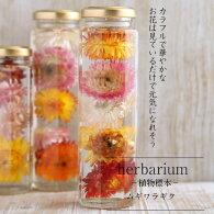 【herbariumBottle】ハーバリウムボトル八角ボトルLサイズ【long】花<ムギワラギク>−植物標本−