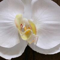 胡蝶蘭髪飾り【白】【小】【中】【ミニサイズ】【ケース付】【一本単位】【花嫁さんの花飾り・白無垢やウェディングドレスと合わせてもらいたい上品な胡蝶蘭のヘッドドレス】