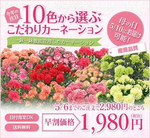 母の日 プレゼント 早割 2012 送料無料今なら母の日当日に届きます!10色から選べる カーネーシ...