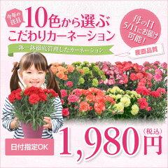 母の日 プレゼント 早割 2012 送料無料今なら母の日当日に届きます!10色から選べるカーネーシ...
