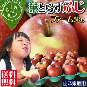 【送料無料】りんご 青森産 サンふじ 昨年22000件のご注文を頂いた葉とらずりんごの中でも一番...