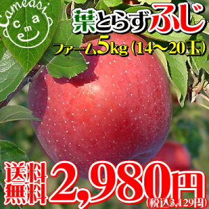 本当に美味しい葉とらずりんご★葉摘みをしないこだわり栽培 りんごに残る黄色い葉の影が美味し...