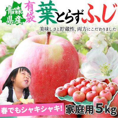 《送料無料》 グルメ大賞2015受賞☆りんごの常識を変える★葉とらずりんご 本場青森ゴールド農…