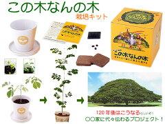 「この木なんの木♪ 気になる木~♪」ハワイ「この木なんの木」気になる木~♪ 120年後に本当...