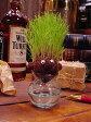 気分はカリスマ美容師だ!芝生育てキット ■ アメリカ雑貨 アメリカン雑貨 観葉植物 通販 こだわり派が夢中になる! 人気のアメリカ雑貨屋 インテリア 置物 おしゃれ おもしろ
