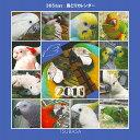2011年版TSUBASA 365days 鳥どりカレンダー