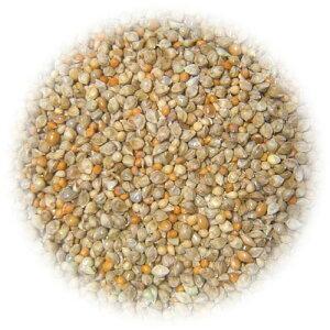 【無農薬栽培】小鳥ミックス 500g[鳥 エサ]【餌】【あす楽対応_東北】【あす楽対応_関東】…