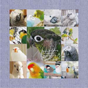 【オリジナル】【インコ】【オウム】2014年版365days 鳥どりカレンダー