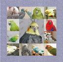 【オリジナル】【インコ】【オウム】2015年版365days 鳥どりカレンダー