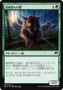 カードミュージアム 楽天市場店で買える「マジック:ザ・ギャザリング 森林群れの狼 マジック・オリジン ORI   ギャザ MTG マジック・ザ・ギャザリング 日本語版 クリーチャー 緑 基本セット」の画像です。価格は30円になります。