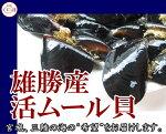 宮城女川産殻付きムール貝/1kg/黒く輝く旨味の宝庫