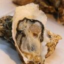 【業務用】牡蠣 訳あり 送料無料 宮城産 殻付き牡蠣 10kg 生食