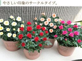 エコロ・サークル【楽ギフ_メッセ入力】4色