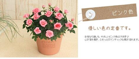 エコロ・サークル【楽ギフ_メッセ入力】ピンク