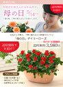 【母の日】送料無料★デイリーローズ!丁寧に植え込んだ、感謝の気持ちを届けるバラの鉢植え♪