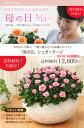 【母の日】送料無料★シュガーラージ!丁寧に植え込んだ、感謝の気持ちを届けるバラの鉢植え♪