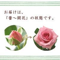 エコロ・サークル【楽ギフ_メッセ入力】開花状態