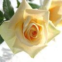 透明感のある、極上の白いバラ。【大輪系】ハイデルベルグ・フォーエバー(4号)