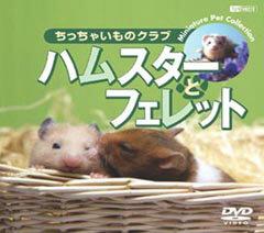 ちっちゃいものクラブ ハムスターとフェレット(DVD)【趣味・教養 DVD】【駅伝_東京】
