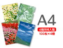 コクヨ クリヤーホルダー<カラーズ>A4ライトピンク×5冊