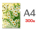 A4クリアファイル印刷300枚