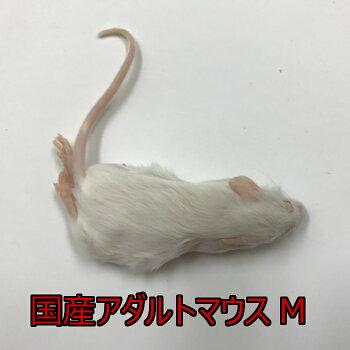 国産冷凍アダルトマウスMサイズ10匹入り冷凍マウス国産1匹18g
