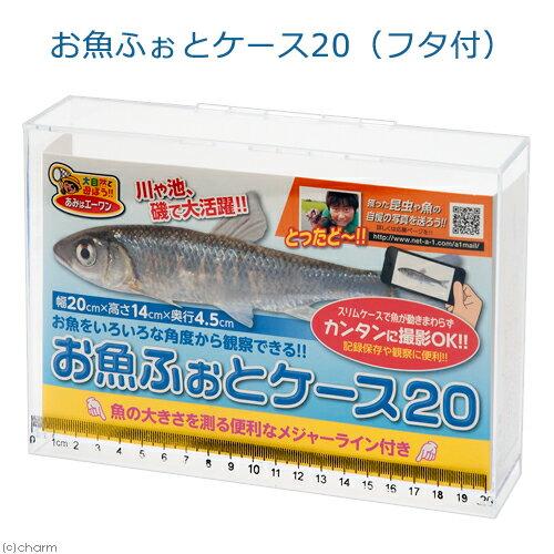 お魚ふぉとケース20(フタ付) 観察 撮影 ケース 水棲昆虫 魚