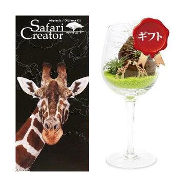 (観葉植物)エアープランツ「サファリ クリエーター」 〜キリン〜(1セット) ギフト仕様