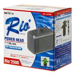 【50Hz】Rio+(リオプラス) 2500 50Hz(東日本用)【関東当日便可能】