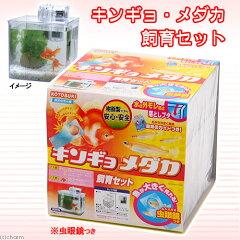 コトブキ kotobuki キンギョ・メダカ飼育セット...