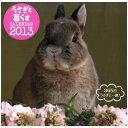 365日うさぎと一緒!うさぎと暮らす カレンダー2013(壁掛)【関東当日便】【HLS_DU】