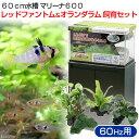 (熱帯魚)後日生体 60Hz 60cm水槽セット マリーナ600 レッドファントム&オランダラム飼育セット(西日本用) 本州・四国限定