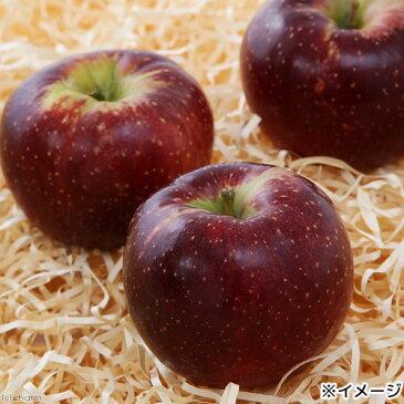 長野県小布施産 赤いりんご 30g ドライフルーツ 国産 無添加 無着色 お1人様4点限り【HLS_DU】 関東当日便