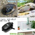 (淡水魚)ヤリタナゴ ドブ貝セット 水槽 飼育用品付き 本州四国限定