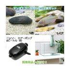 (淡水魚)ヤリタナゴ カワシンジュ貝セット 水槽 飼育用品付き 本州・四国限定