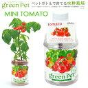ペットボトルで育てる水耕栽培!育てるグリーンペット ベジ ミニトマト 関東当日便