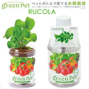 育てるグリーンペット ベジ ルッコラ 家庭菜園 キッチン菜園 室内園芸 関東当日便