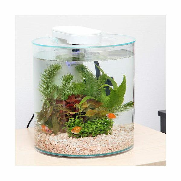 GEX アクア360R まめピンポンフルセット 金魚 インテリア 飼育セット