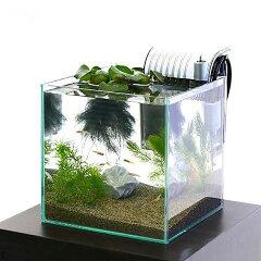 メダカ飼育を楽しもう!(淡水魚)本州・四国限定 テーブルで楽しむメダカ水槽セット 説明書付