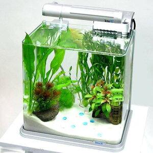 (熱帯魚 水草)南国の楽園 カージナルテトラと泳ぐ水槽セット ヒーター 水温計 説明書 熱帯魚…