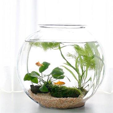 (金魚)(水草)おしゃれなガラス製金魚鉢 太鼓鉢 大 金魚飼育セット 説明書付 本州・四国限定