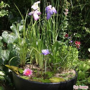 ◆おまかせビオトープ植物セット20種(スイレン2種含む)