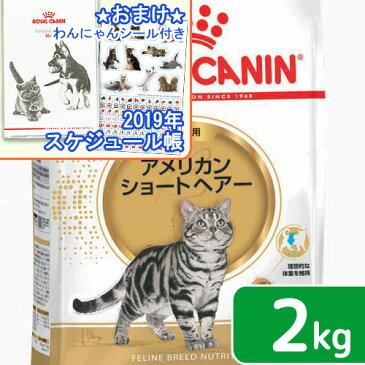 ロイヤルカナン 猫 アメリカンショートヘアー 2kg ジップ付 スケジュール帳おまけ付【HLS_DU】 関東当日便