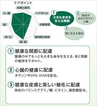 ロイヤルカナン 猫 メインクーン 成猫用 2Kg ジップ付 スケジュール帳おまけ付【HLS_DU】 関東当日便