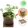 (観葉)種まき済み シロクローバー栽培 ECOポット+ECO受け皿 1セット 白クローバー 白詰草 シロツメクサ リクガメ用